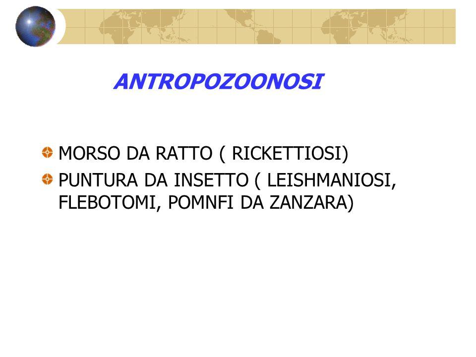 ANTROPOZOONOSI MORSO DA RATTO ( RICKETTIOSI)