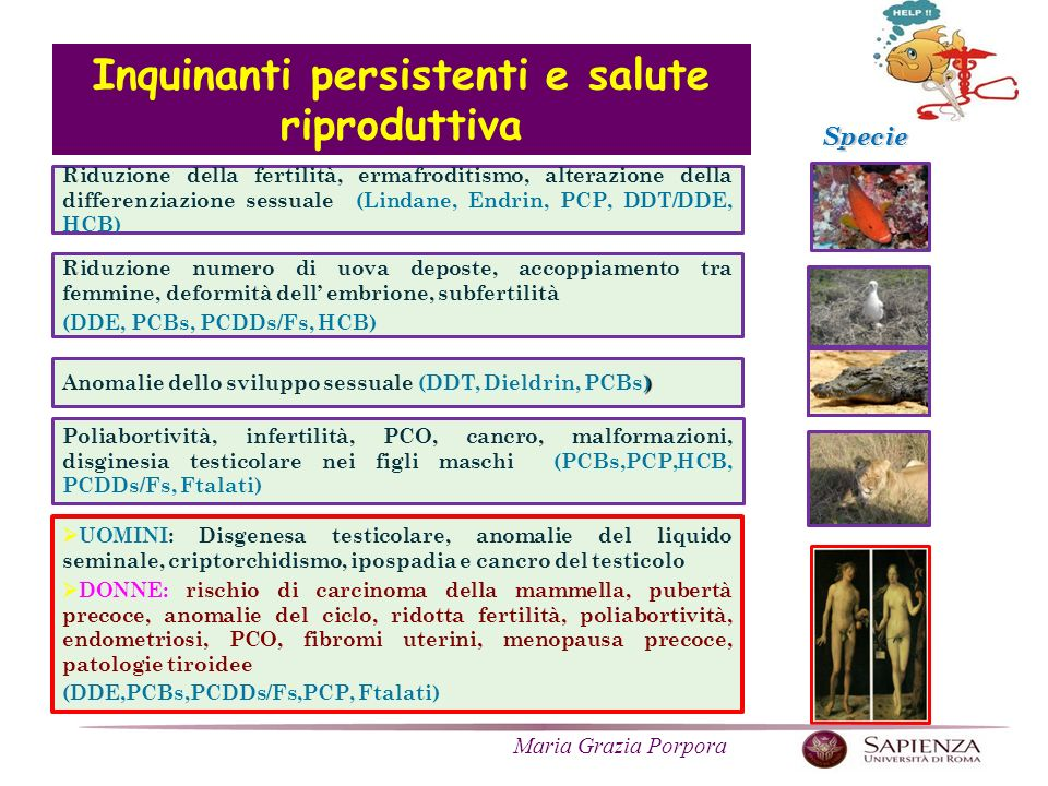 Inquinanti persistenti e salute riproduttiva