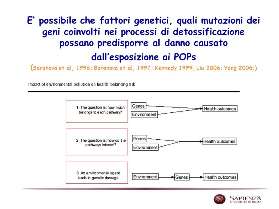 E' possibile che fattori genetici, quali mutazioni dei geni coinvolti nei processi di detossificazione possano predisporre al danno causato dall'esposizione ai POPs (Baranova et al, 1996; Baranova et al, 1997; Kennedy 1999, Liu 2006; Yang 2006;)