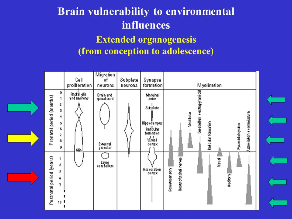 Brain vulnerability to environmental influences
