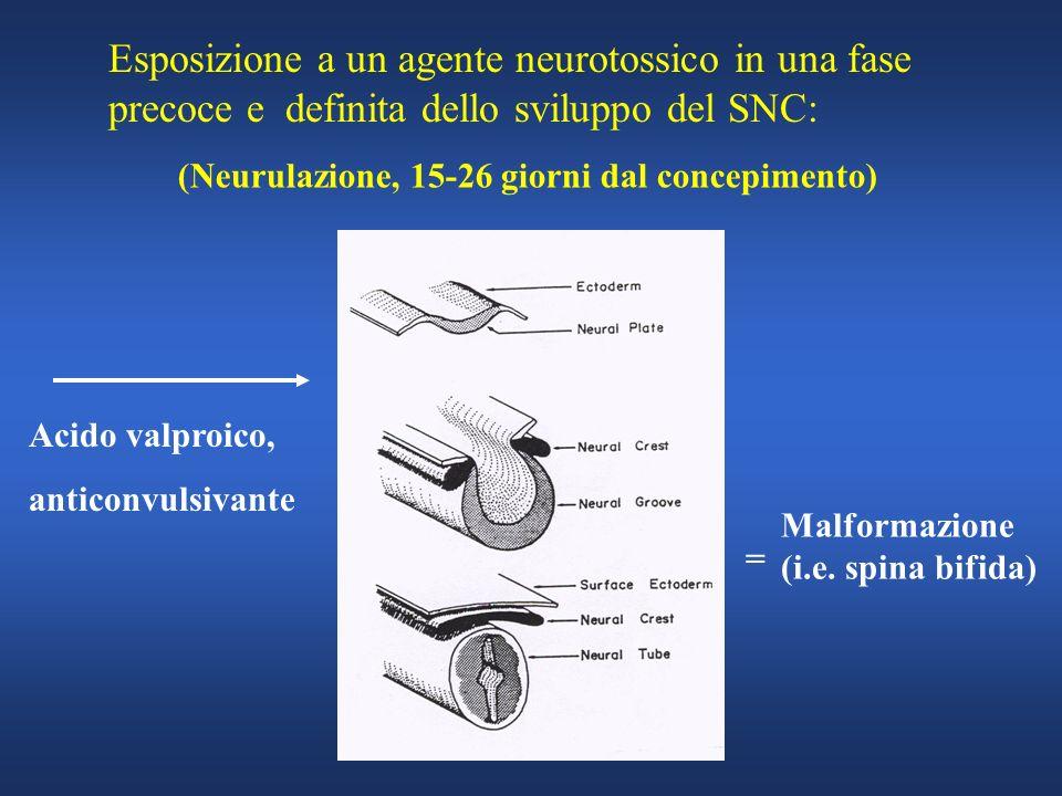 Esposizione a un agente neurotossico in una fase precoce e definita dello sviluppo del SNC: