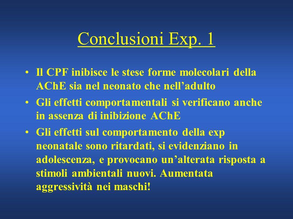Conclusioni Exp. 1 Il CPF inibisce le stese forme molecolari della AChE sia nel neonato che nell'adulto.