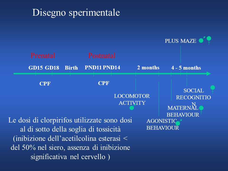 Disegno sperimentale Prenatal Postnatal