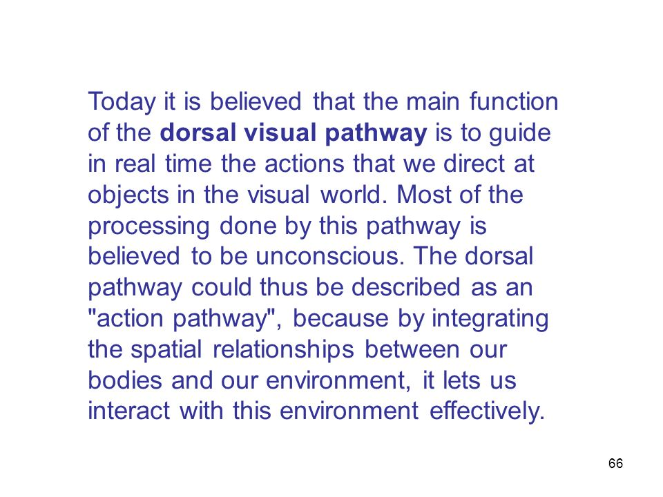 Today it is believed that the main function of the dorsal visual pathway is to guide in real time the actions that we direct at objects in the visual world.