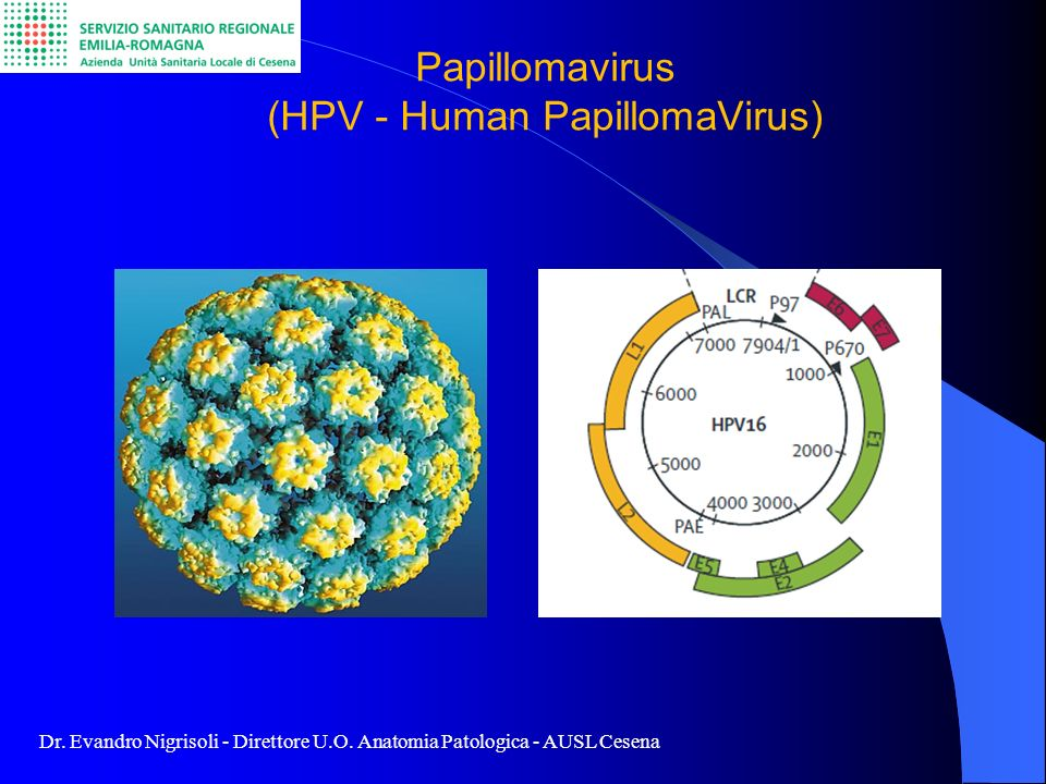 Papillomavirus (HPV - Human PapillomaVirus)
