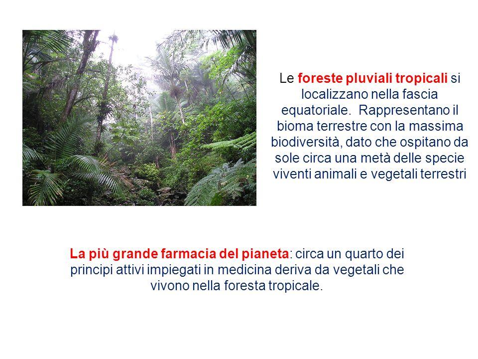 Le foreste pluviali tropicali si localizzano nella fascia equatoriale