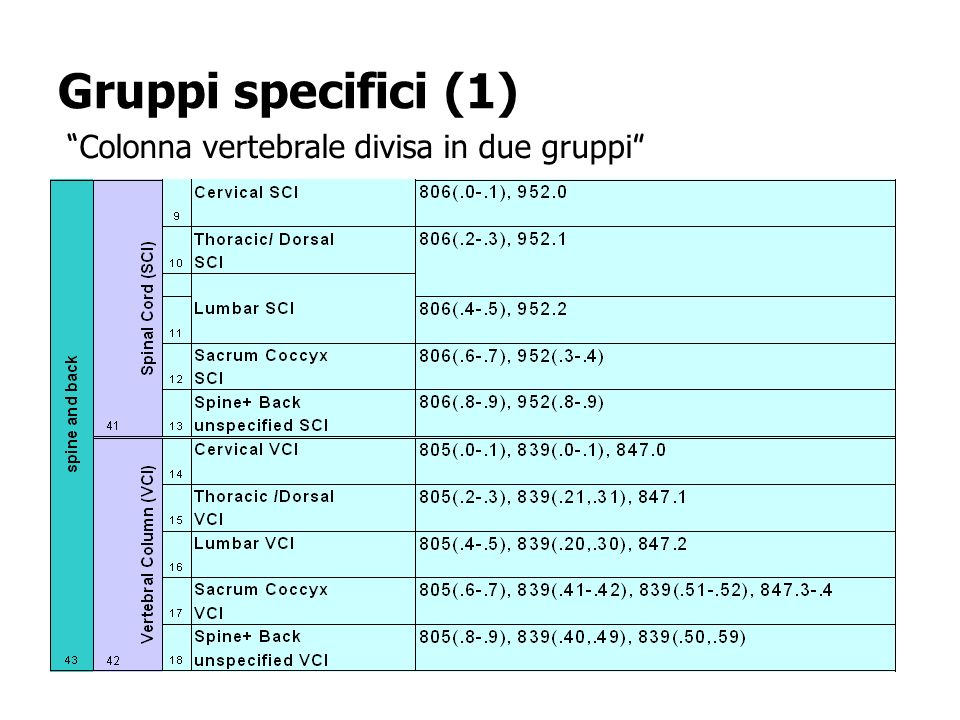 Gruppi specifici (1) Colonna vertebrale divisa in due gruppi