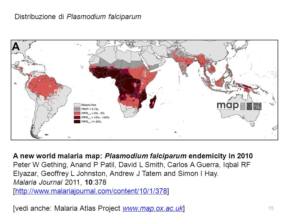 Distribuzione di Plasmodium falciparum