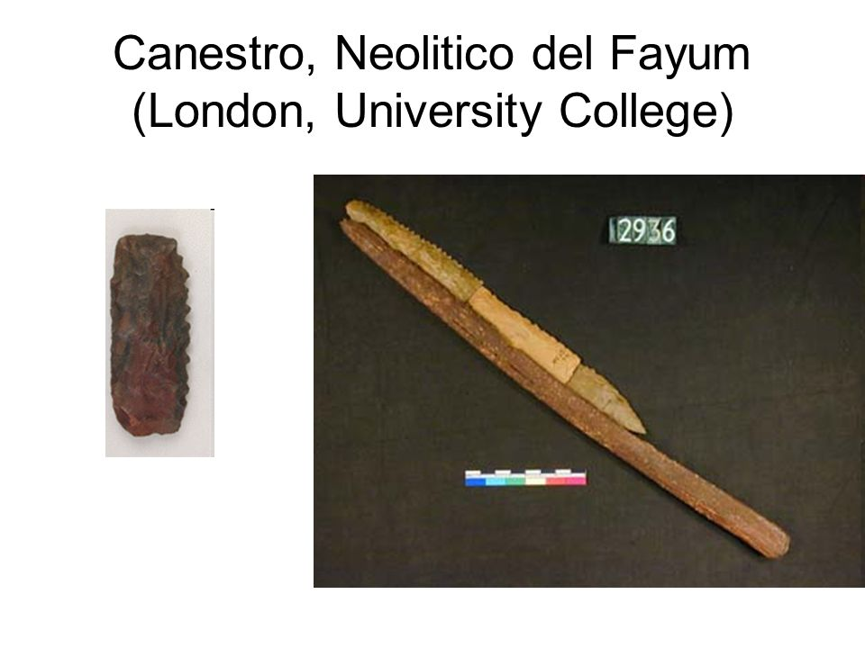 Canestro, Neolitico del Fayum (London, University College)