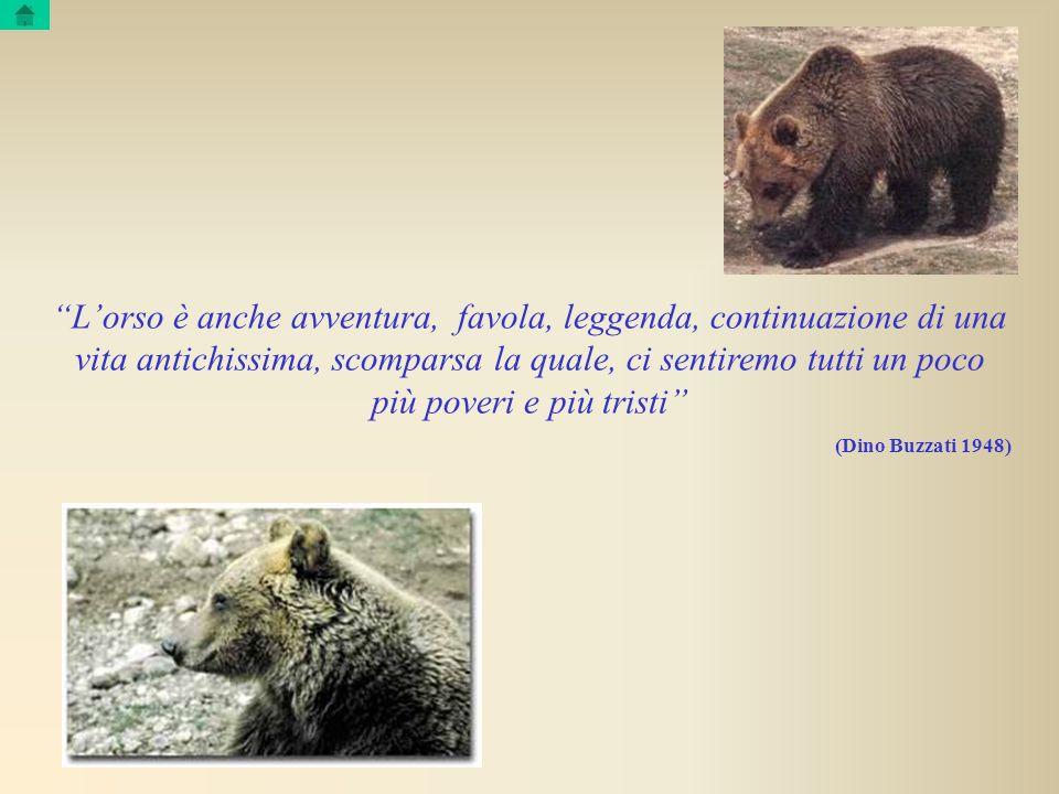 L'orso è anche avventura, favola, leggenda, continuazione di una vita antichissima, scomparsa la quale, ci sentiremo tutti un poco più poveri e più tristi
