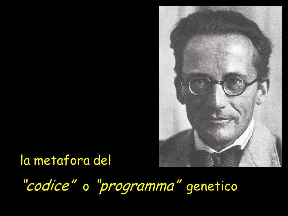 codice o programma genetico