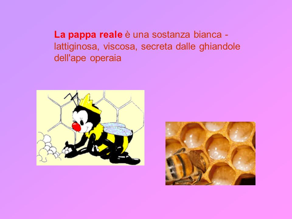 La pappa reale è una sostanza bianca - lattiginosa, viscosa, secreta dalle ghiandole dell ape operaia