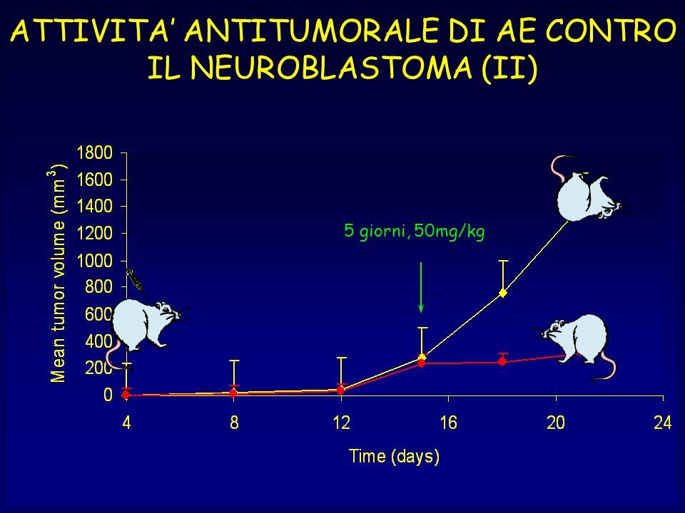 ATTIVITA' ANTITUMORALE DI AE CONTRO IL NEUROBLASTOMA (II)