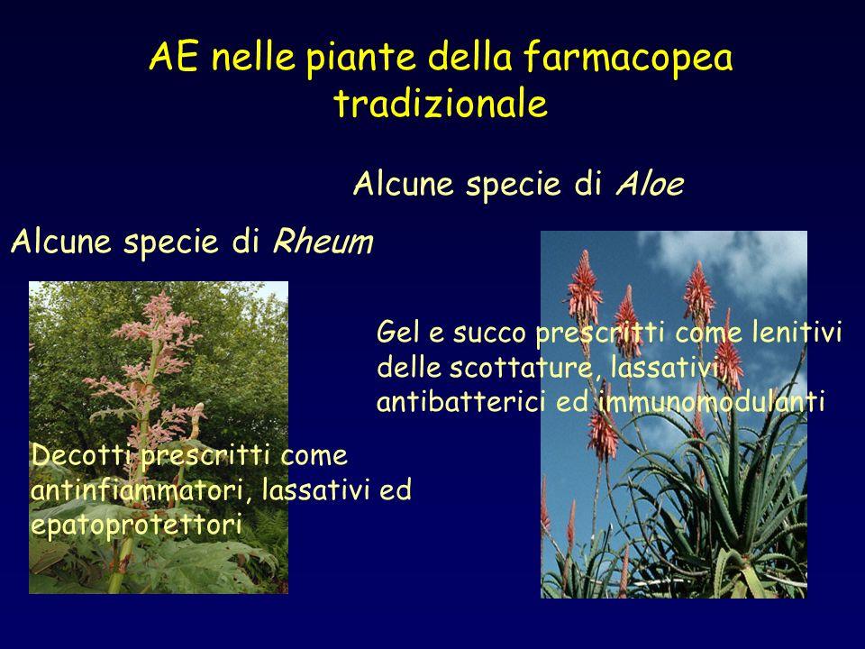 AE nelle piante della farmacopea tradizionale