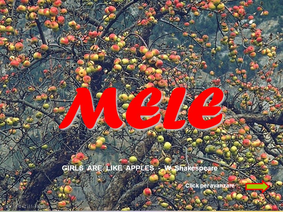 MELE GIRLS ARE LIKE APPLES - W. Shakespeare Click per avanzare