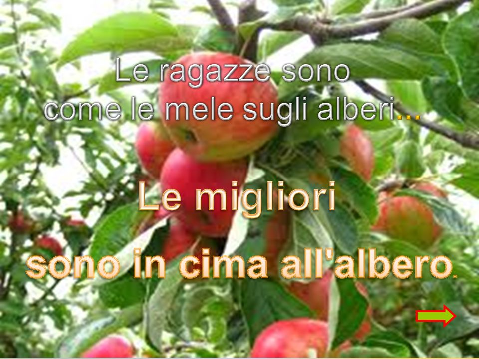 come le mele sugli alberi...
