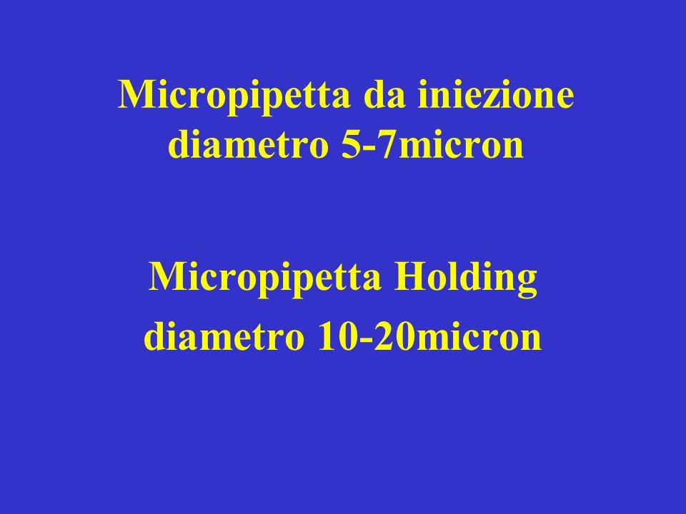 Micropipetta da iniezione diametro 5-7micron