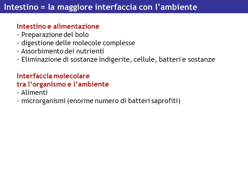 Intestino = la maggiore interfaccia con l'ambiente