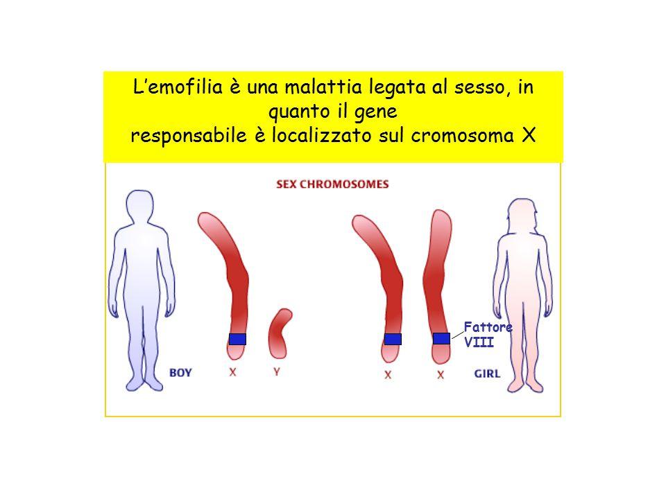 L'emofilia è una malattia legata al sesso, in quanto il gene