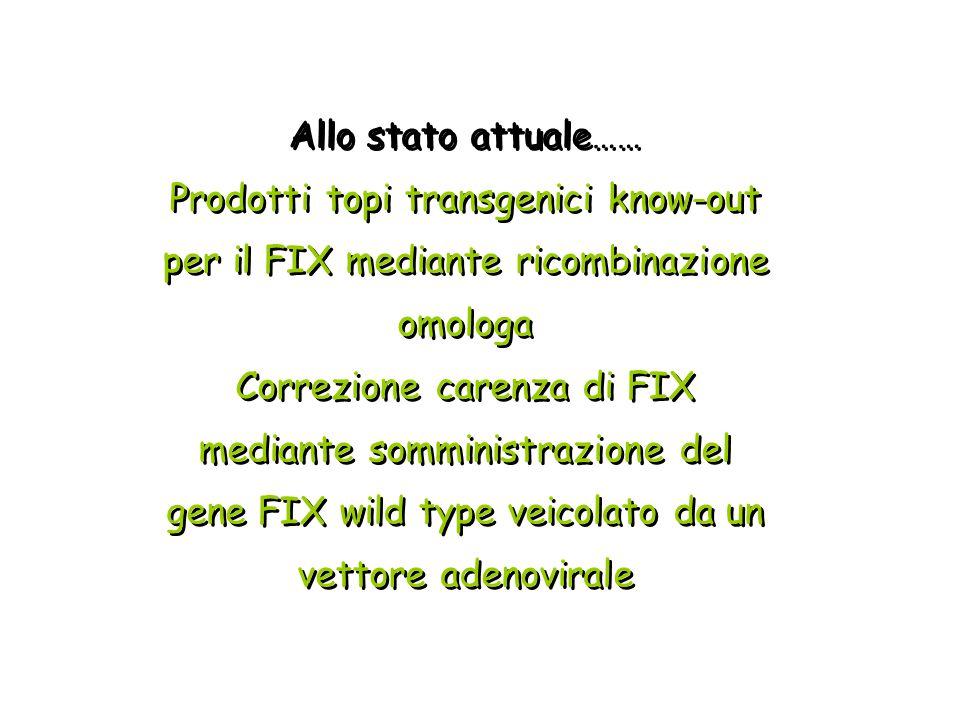 Allo stato attuale…… Prodotti topi transgenici know-out per il FIX mediante ricombinazione omologa.