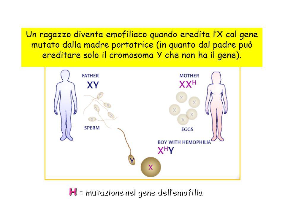 H = mutazione nel gene dell'emofilia