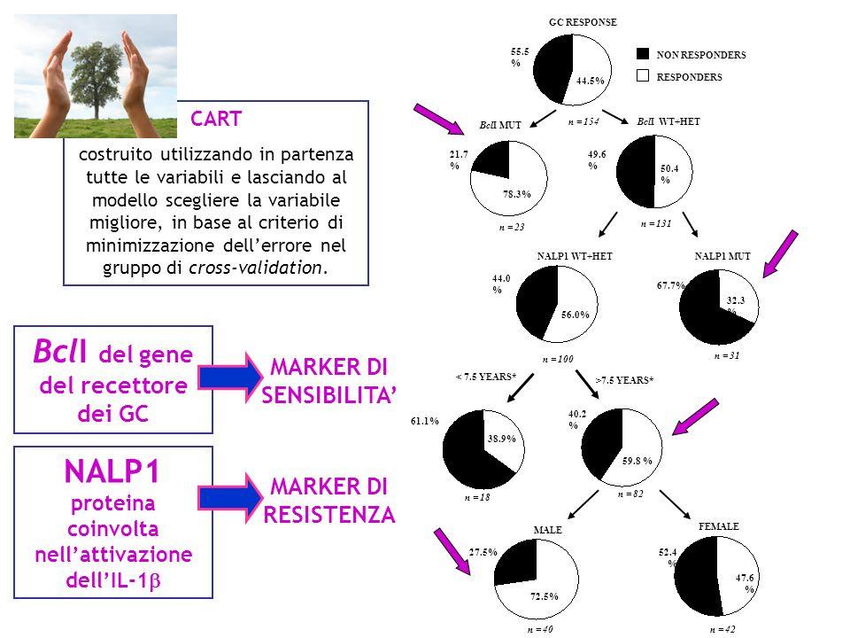 BclI del gene del recettore dei GC