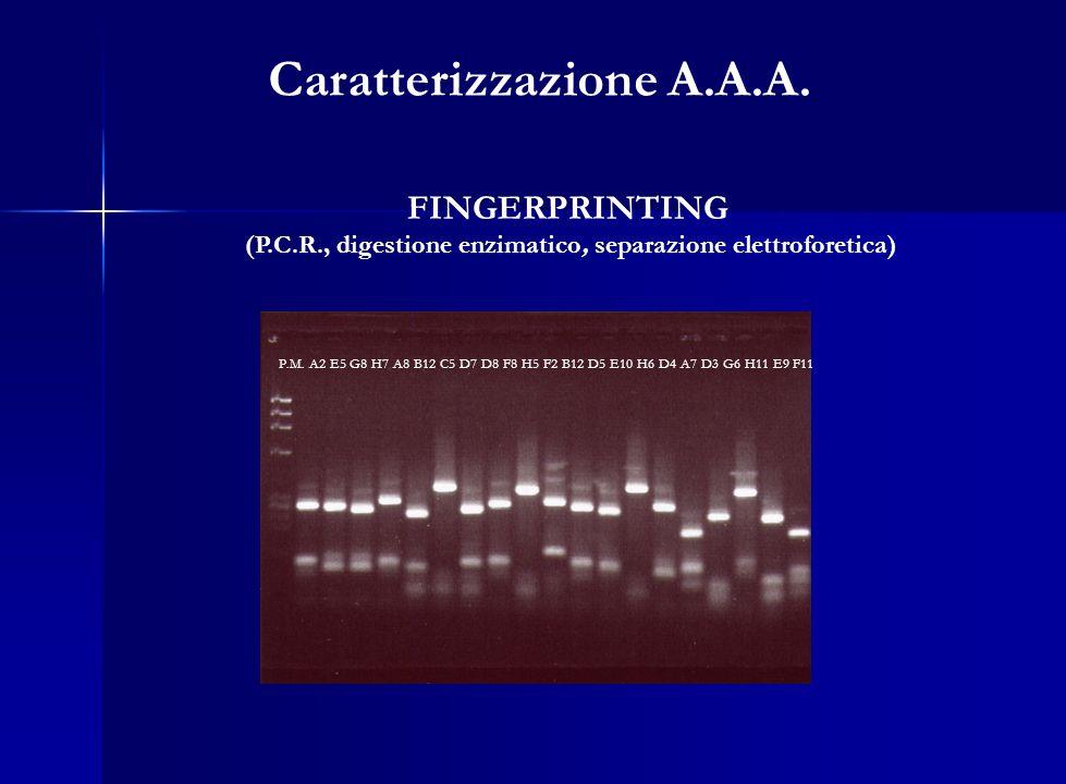 Caratterizzazione A.A.A.