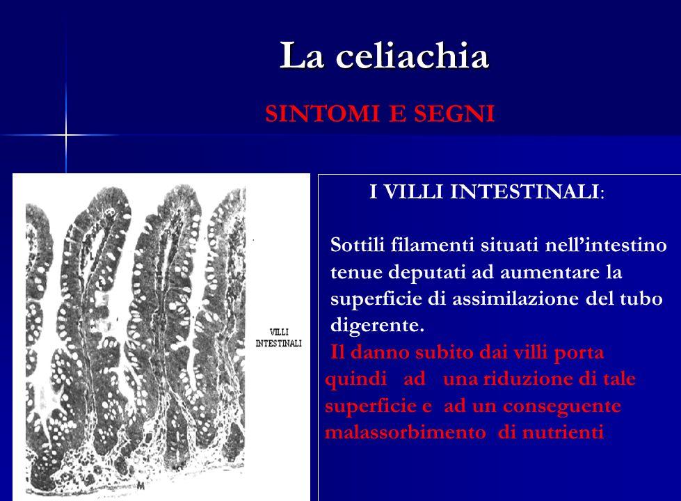 La celiachia SINTOMI E SEGNI I VILLI INTESTINALI: