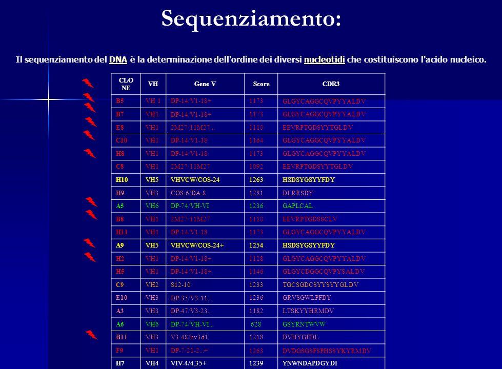 Sequenziamento: Il sequenziamento del DNA è la determinazione dell ordine dei diversi nucleotidi che costituiscono l acido nucleico.