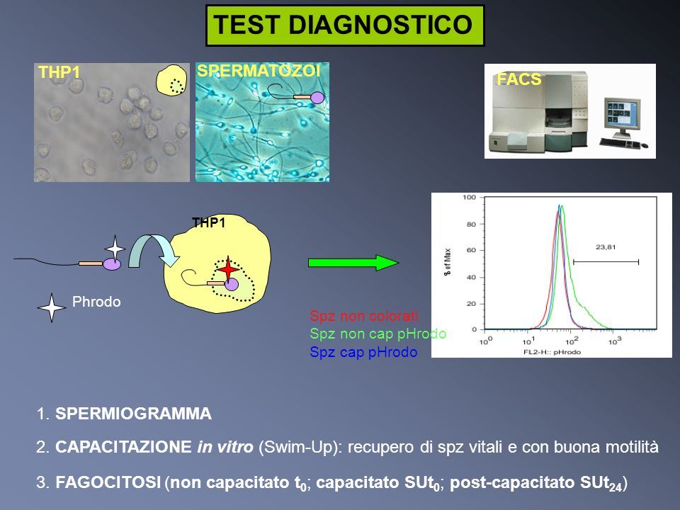 TEST DIAGNOSTICO THP1 SPERMATOZOI FACS 1. SPERMIOGRAMMA