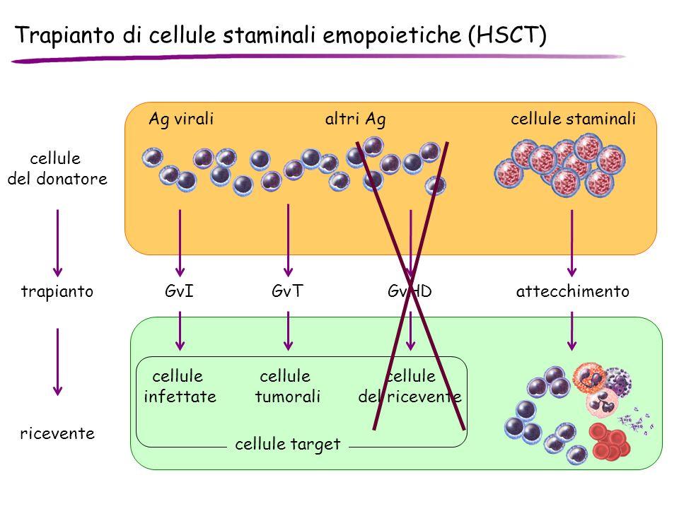 Trapianto di cellule staminali emopoietiche (HSCT)