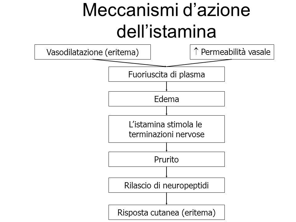 Meccanismi d'azione dell'istamina