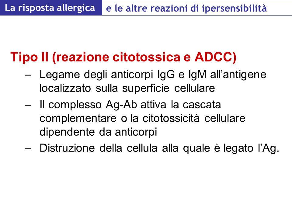 Tipo II (reazione citotossica e ADCC)