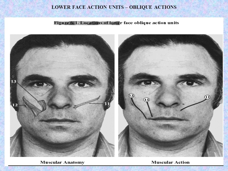 LOWER FACE ACTION UNITS – OBLIQUE ACTIONS