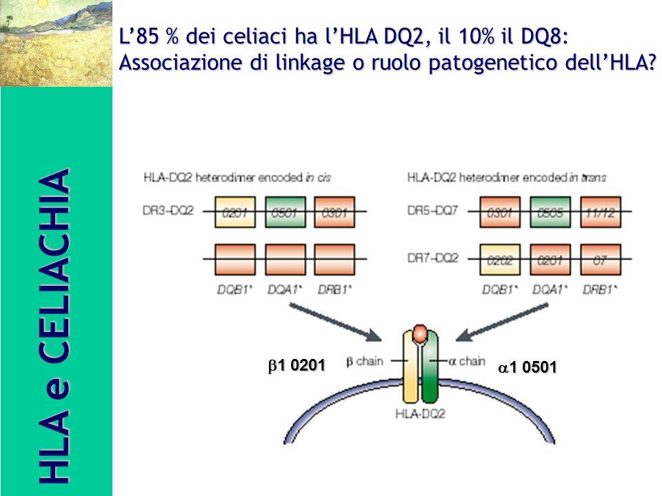 HLA e CELIACHIA L'85 % dei celiaci ha l'HLA DQ2, il 10% il DQ8: