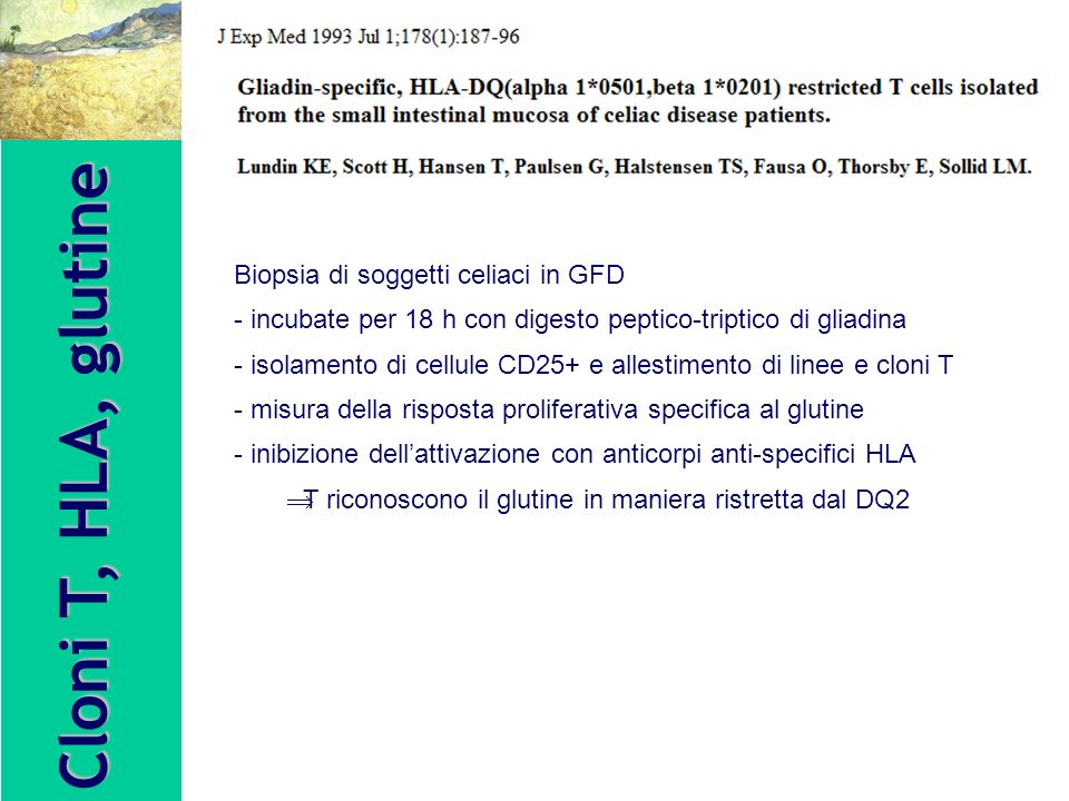 Cloni T, HLA, glutine Biopsia di soggetti celiaci in GFD