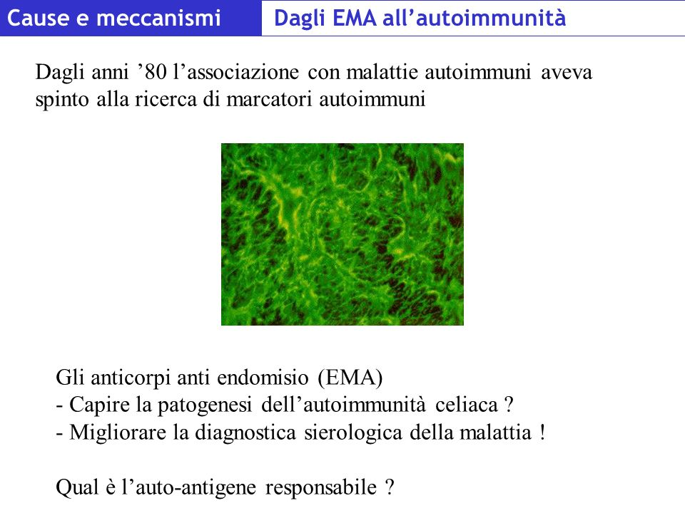 Cause e meccanismi Dagli EMA all'autoimmunità.