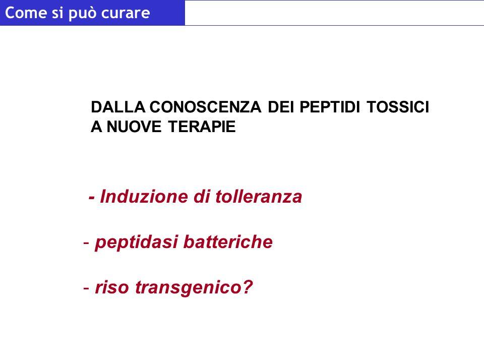 - Induzione di tolleranza peptidasi batteriche riso transgenico