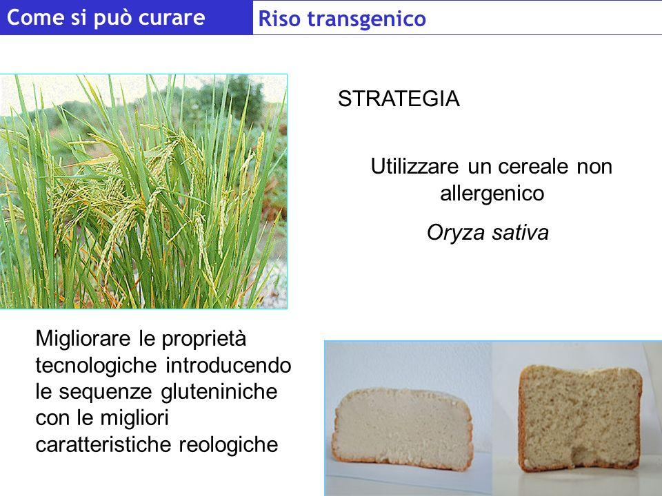 Utilizzare un cereale non allergenico