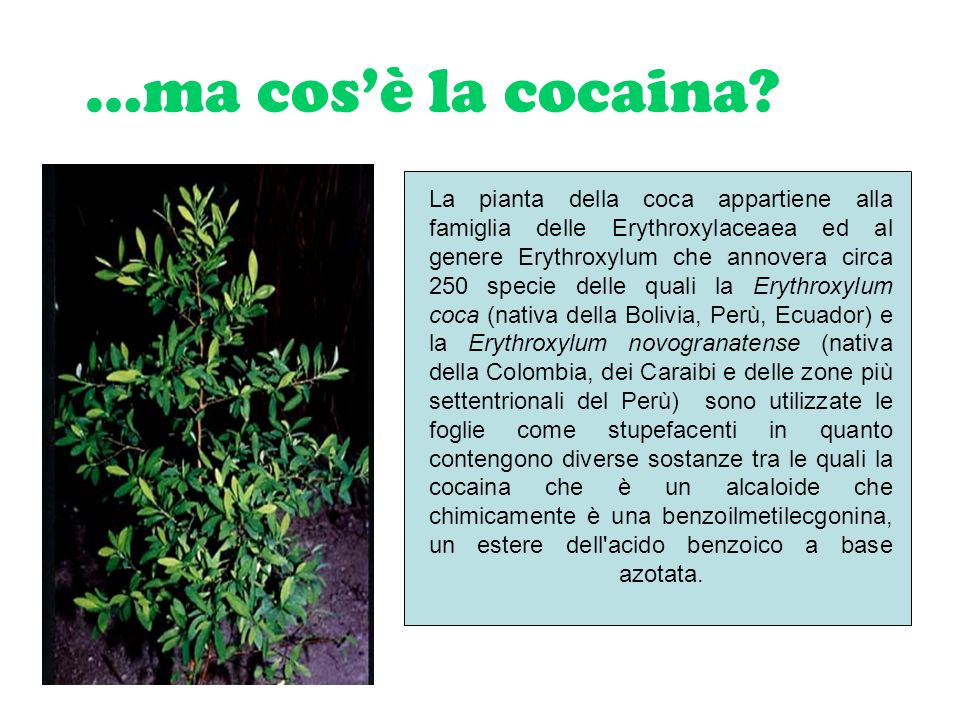 …ma cos'è la cocaina