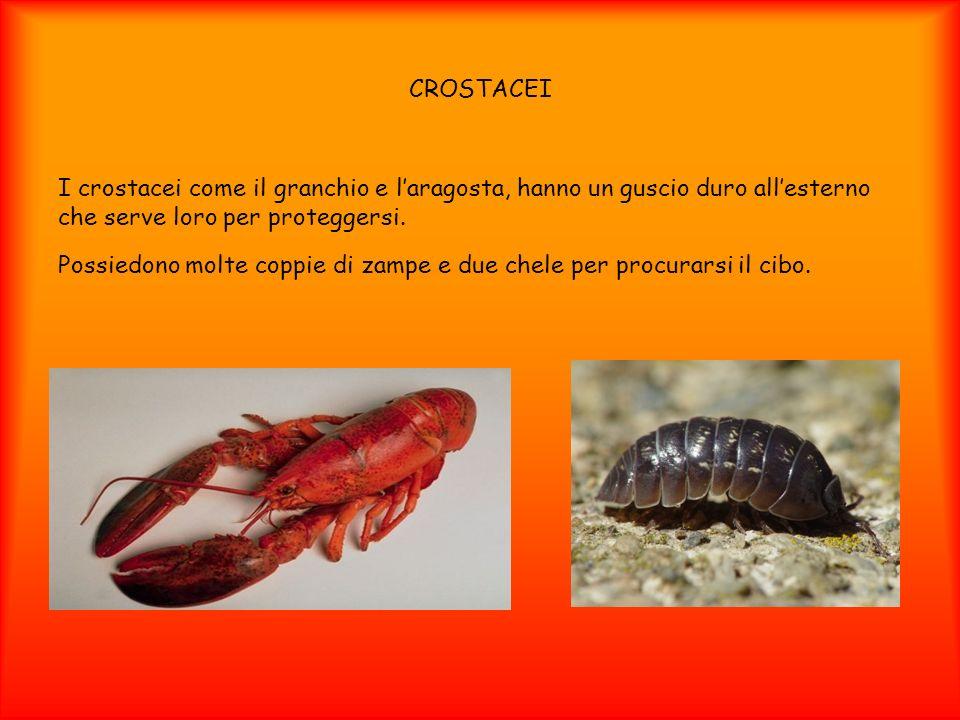 CROSTACEI I crostacei come il granchio e l'aragosta, hanno un guscio duro all'esterno che serve loro per proteggersi.