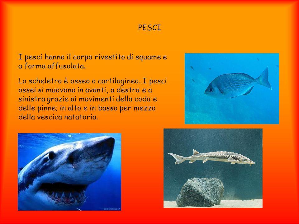 PESCII pesci hanno il corpo rivestito di squame e a forma affusolata.