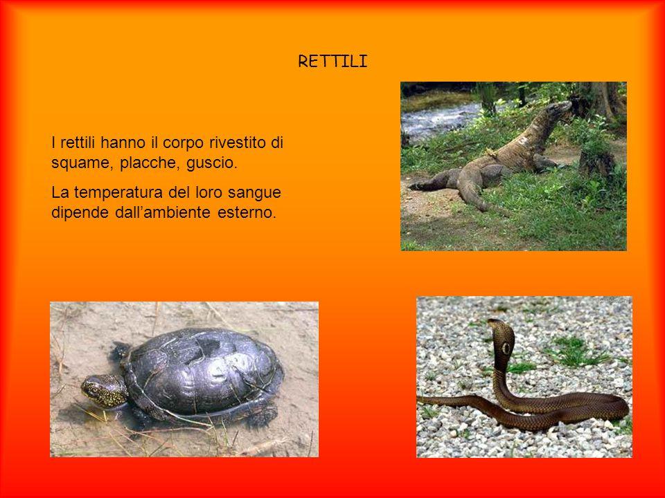 RETTILI I rettili hanno il corpo rivestito di squame, placche, guscio.