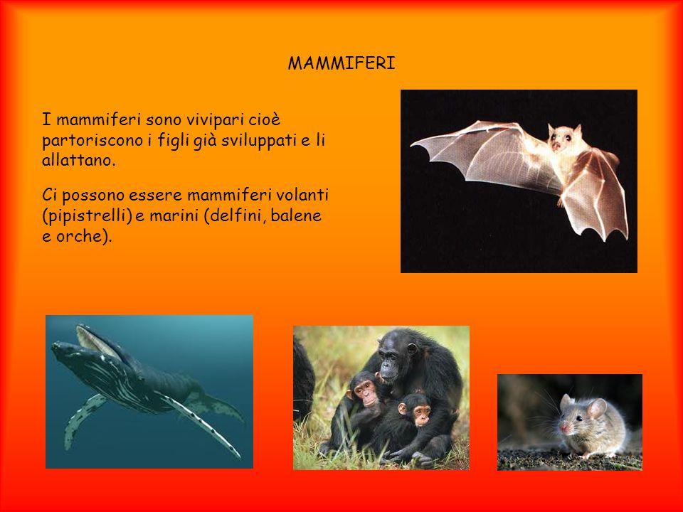 MAMMIFERII mammiferi sono vivipari cioè partoriscono i figli già sviluppati e li allattano.