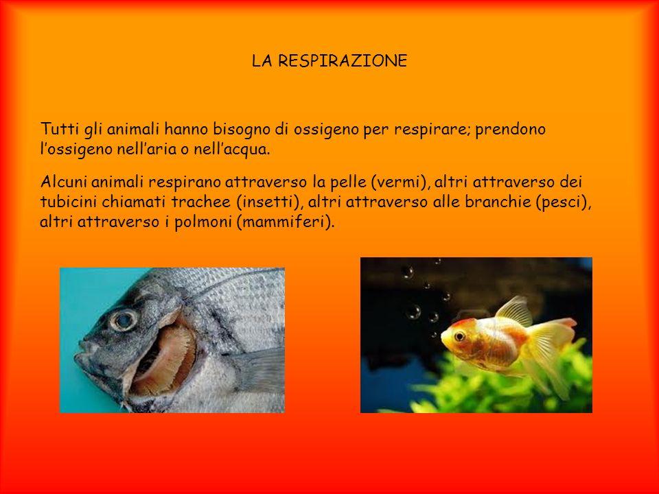 LA RESPIRAZIONE Tutti gli animali hanno bisogno di ossigeno per respirare; prendono l'ossigeno nell'aria o nell'acqua.