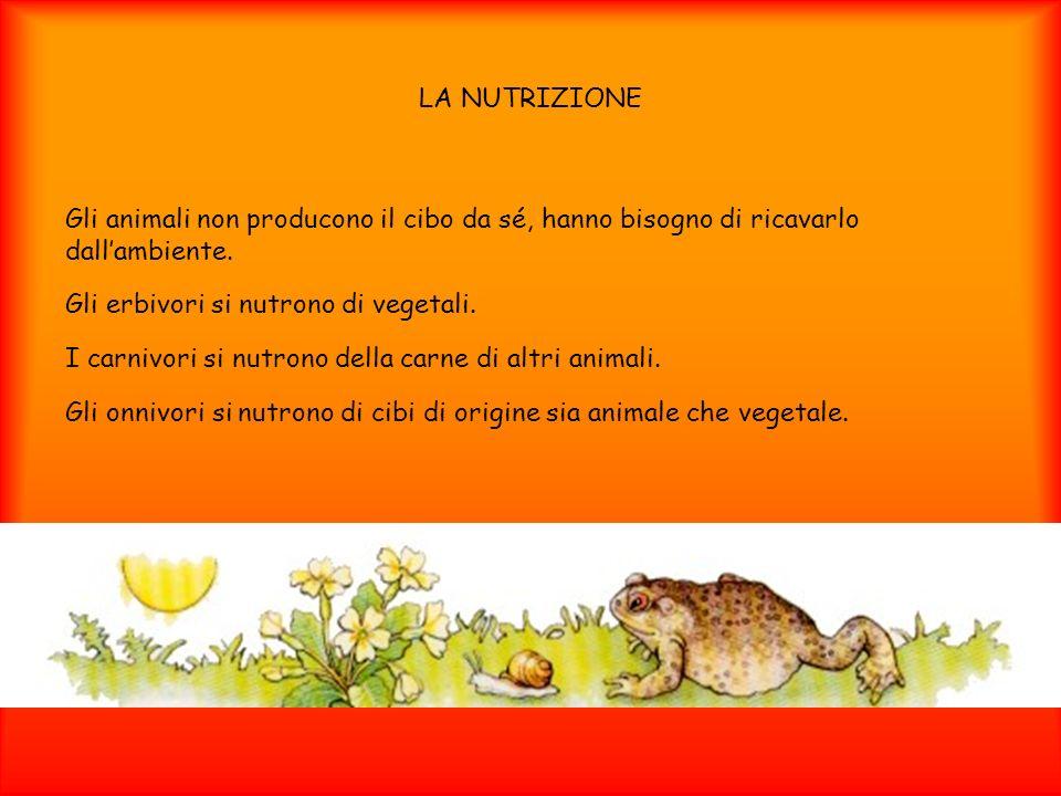 LA NUTRIZIONE Gli animali non producono il cibo da sé, hanno bisogno di ricavarlo dall'ambiente. Gli erbivori si nutrono di vegetali.