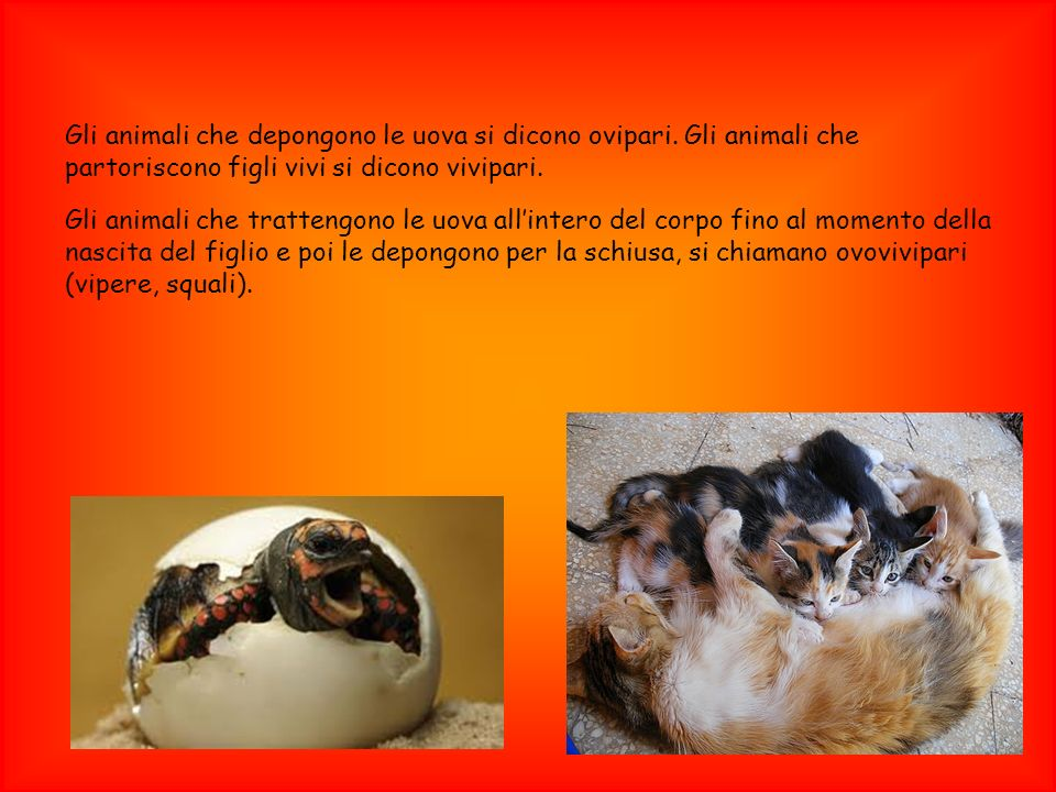 Gli animali che depongono le uova si dicono ovipari