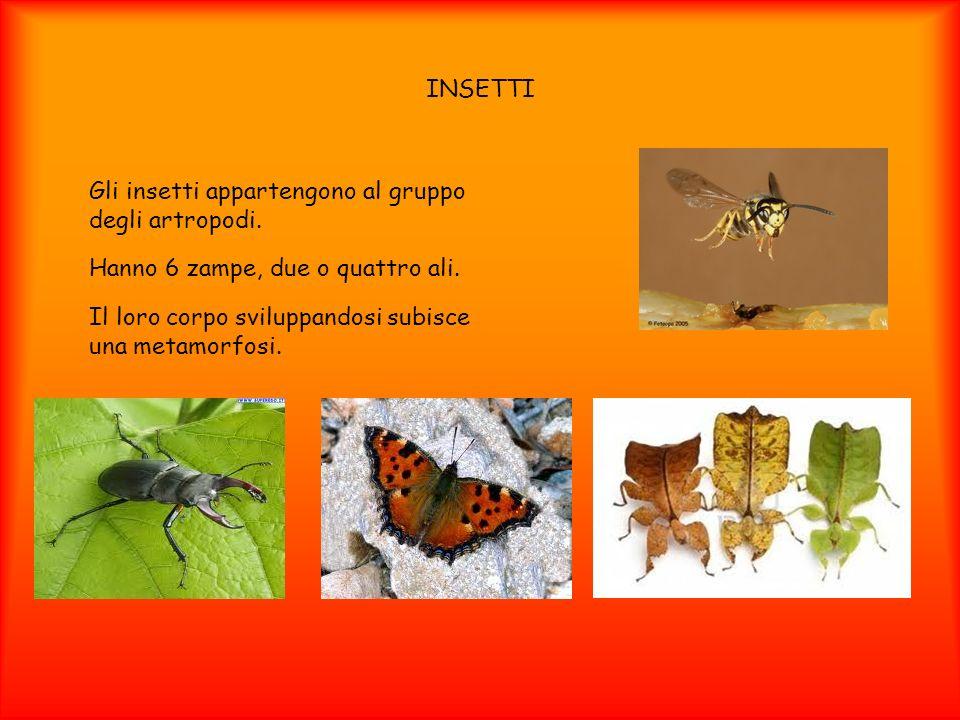 INSETTI Gli insetti appartengono al gruppo degli artropodi. Hanno 6 zampe, due o quattro ali.