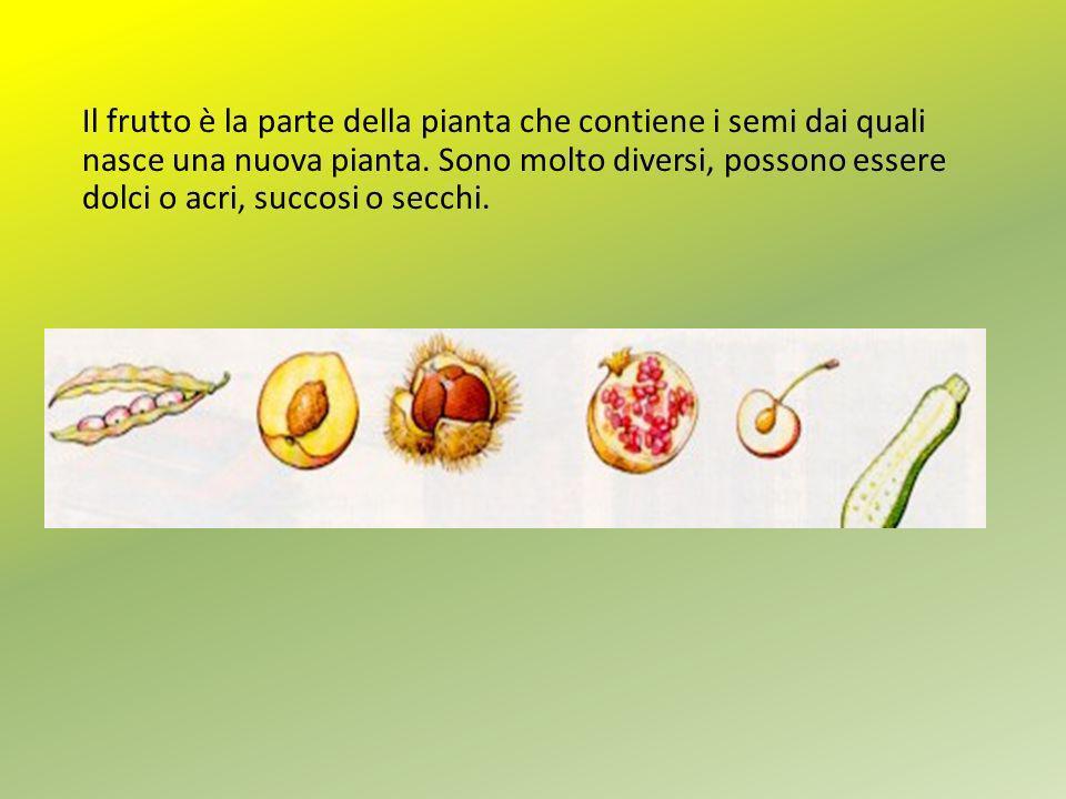 Il frutto è la parte della pianta che contiene i semi dai quali nasce una nuova pianta.