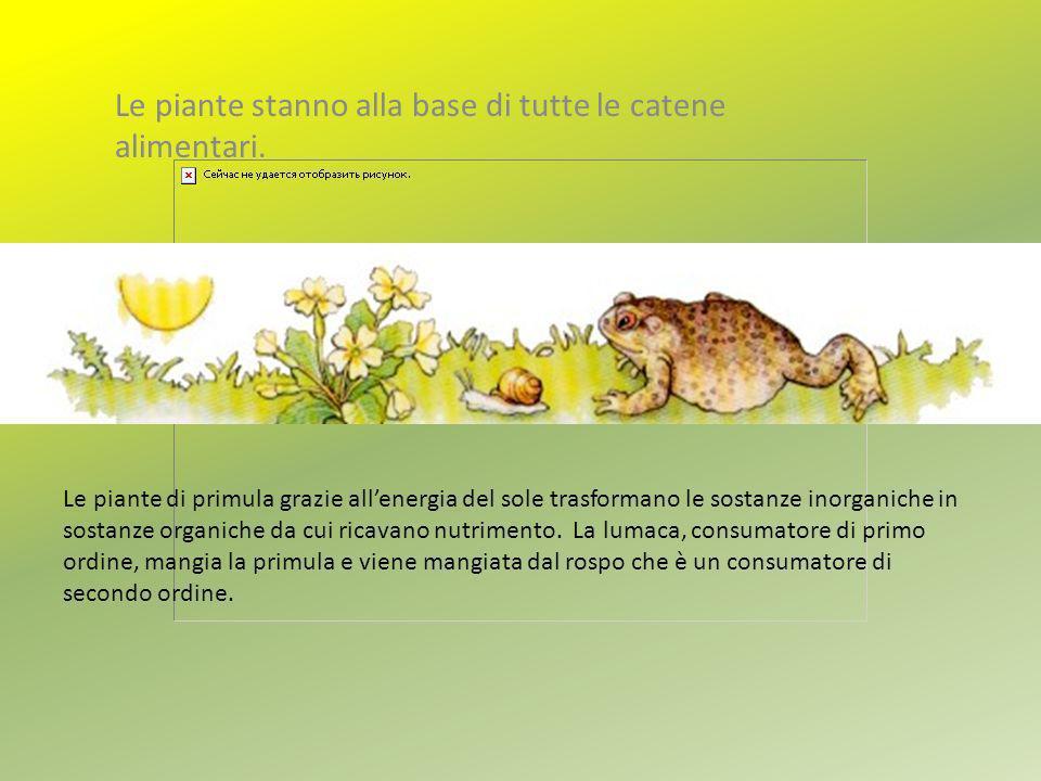 Le piante stanno alla base di tutte le catene alimentari.